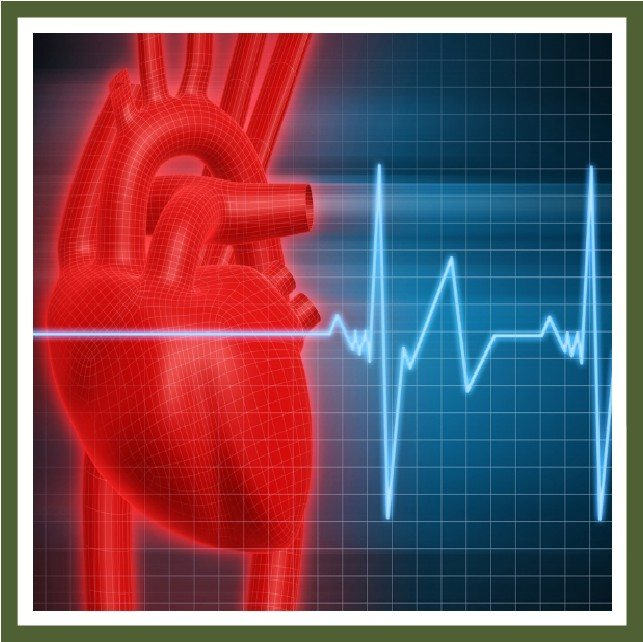 Cardiovascular Health Supplements - Natural Cardiovascular Health Supplements, Heart Health Supplements, Natural Supplements